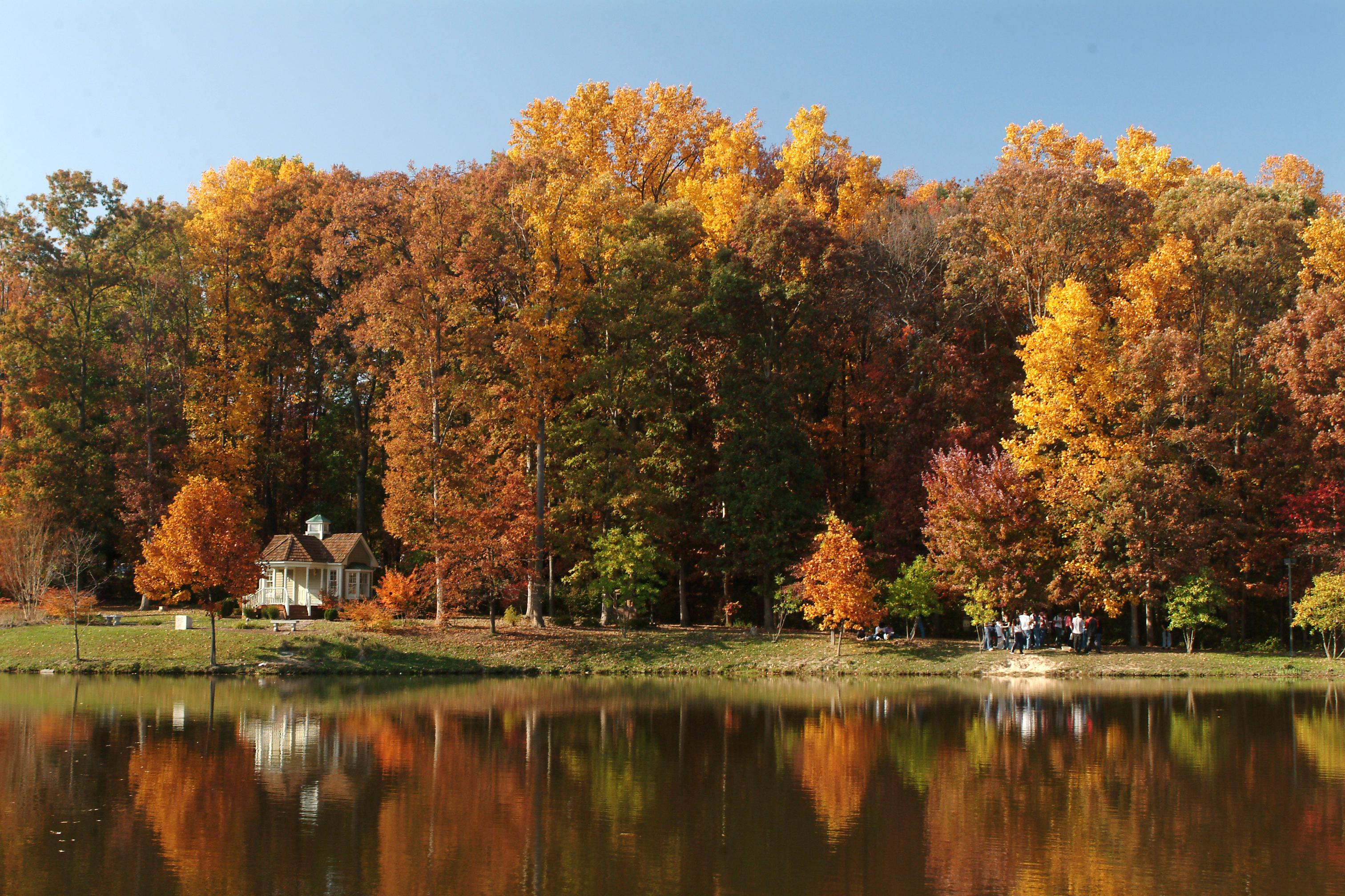 Pond - Fall